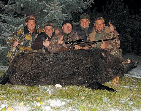 Охота на марала и изюбря - Охота по зверю