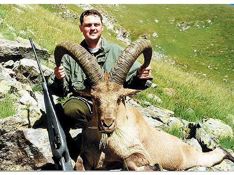 Рога взрослого самца кавказского тура неоставят равнодушным любого охотника за трофеями.