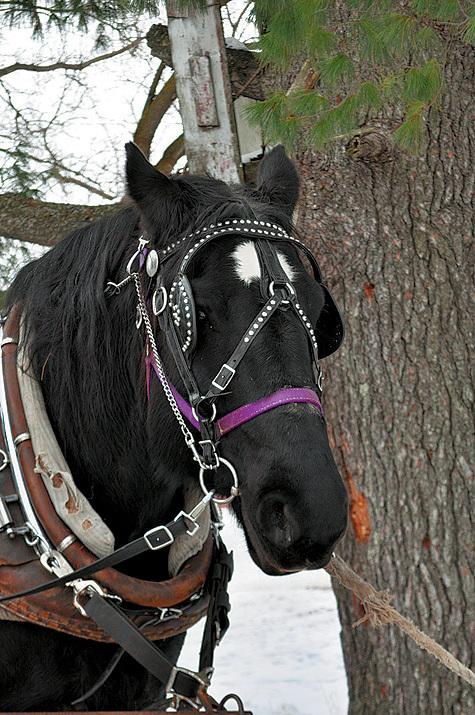 Фото: www.flickr.com/jennifer pelotrysewyk