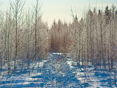фото: Илья Липин