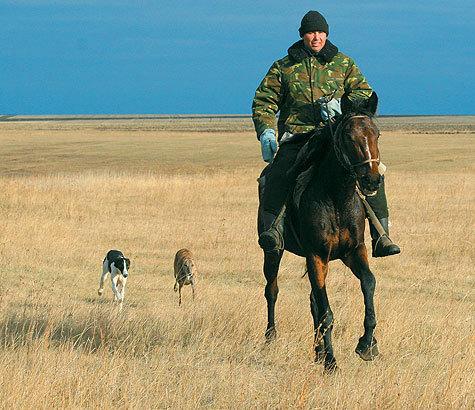 Хортые борзые как нельзя лучше подходят для травли зверя вусловиях степей юга России иУкраины. Автор фото: Анна Шубкина