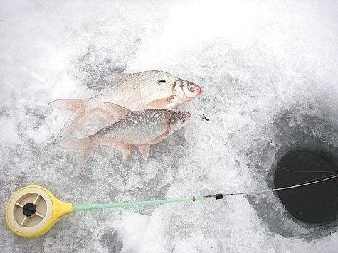 рыбалка на окуня и леща