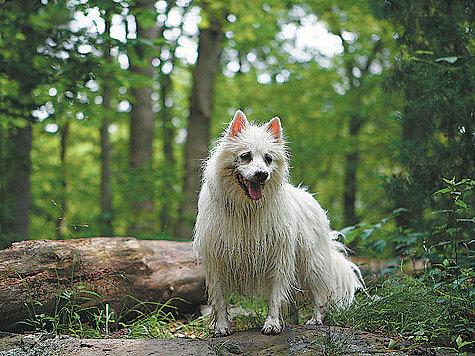 Фото: davidz-flickr.com