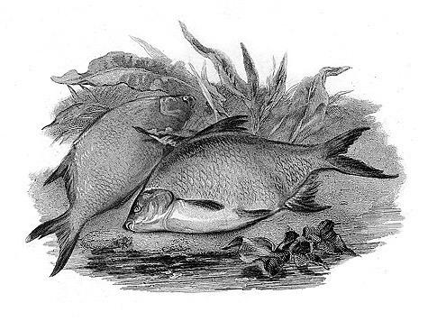 Иллюстрация из архива Вильяма Д. Трего