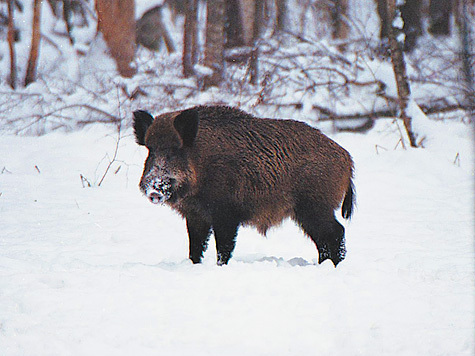 Фото: Сергей Наумов