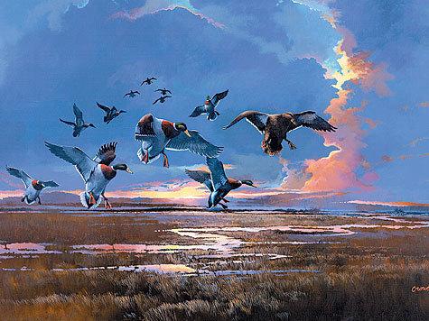 Редкую весну кряковые утки не прилетают первыми или сразу вслед закрохалями. Иллюстрация: Crowe.