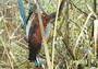 Жар-птица родом из Астрахани