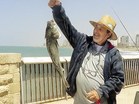 «Лаврак!» — восклицает рыбак и тут же убирает трофей в сумку.