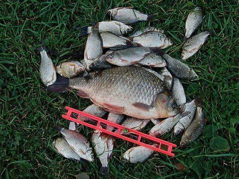 Улов из пруда, в котором рыбы нет. Фото: Андрей Яншевский.