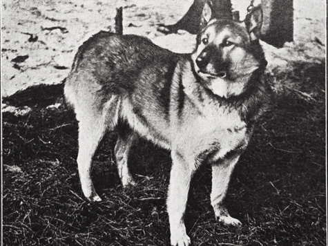 Фото из архива Павла Гусева
