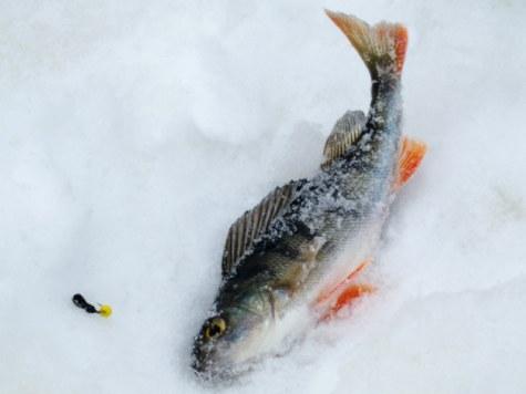 какая рыба завтра клюет