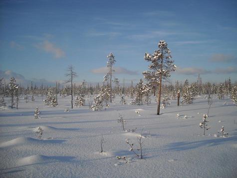 Февраль. Мертвая пороша. Фото: Сергея Сорокина