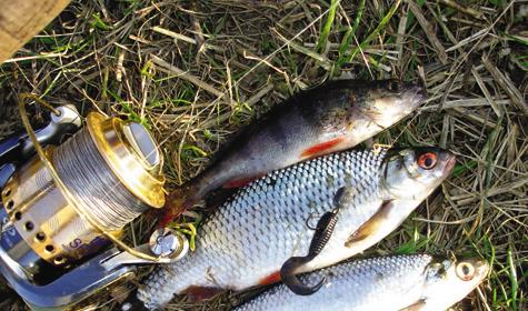 рыбалка на дону на хищника видео