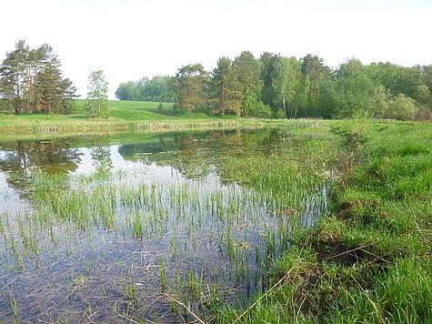 Щука часто предпочитает охотиться на заросших участках водоемов. Фото автора.