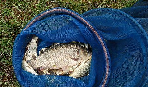 После четырехчасовой рыбалки все рыбы живы и здоровы. Фото: Андрей Яншевский.