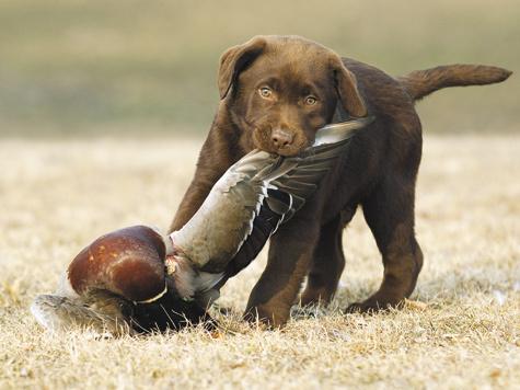Фото Shutterstock.com