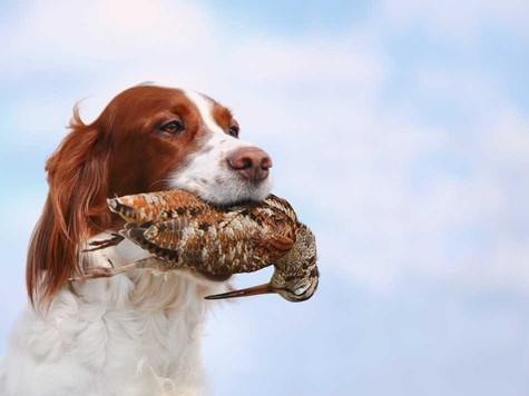В моем охотобществе мне сказали, что пока у общества есть угодья, оно будет существовать. Фото: fotolia.com