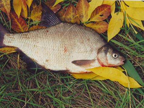 в какие дни хорошо клюет рыба