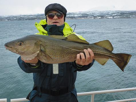 Представители семейства тресковых всеверных водах Норвегии особенно впечатляют. Рекордный вес трески, пойманной вСеверной Норвегии, превысил 40 кг.