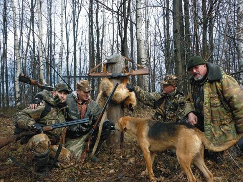 Удачная охота стала результатом совокупности факторов: опыта гончатников, качества гончих, нашего упорства ивезения.