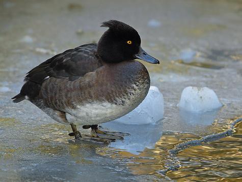 Навсем пути мигрирующих птиц тысячи охотников устремляются туда, где есть возможность посоревноваться состорожной ибдительной птицей.