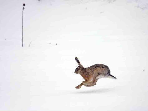 Не следует пропагандировать выстрелы на предельные дистанции, а тем более начинающим охотникам стремиться достичь успеха, стреляя далее 40 метров. Фото: fotolia.com