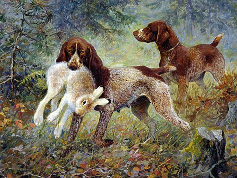 Иллюстрация из архива государственного дарвиновского музея