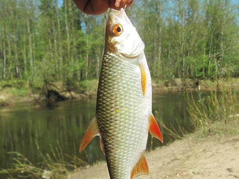 платная рыбалка серебряные пруды