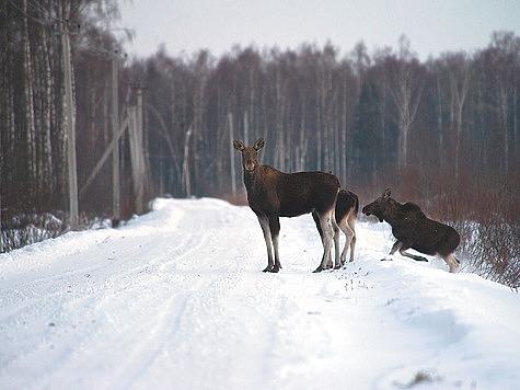 Фото Александра Левашова.