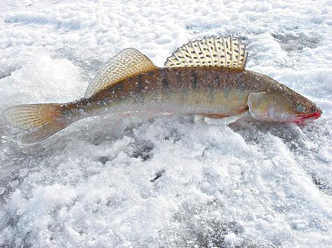 Тактика поиска и техника ловли с блесной на реке