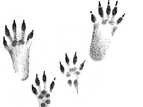 Рис. 1.  Отпечаток прыжка белки намелком влажном снегу. Ноябрь 1992 г.