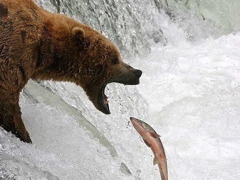 Охота – дело не только поэтичное, но и жестокое. На ней убивают птиц и зверей. На то она и охота. Я не понимаю тех людей, которые ловят рыбу без нужды, а потом ее отпускают или выбрасывают.