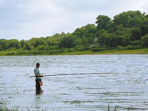 пшеница на рыбалку фото
