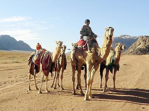 Наарабском востоке балобанвсегда был культовой священной птицей.