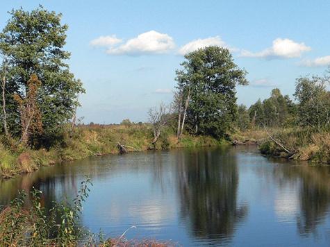 Пейзажи русской равнины неброские, норадуют взоры охотников.