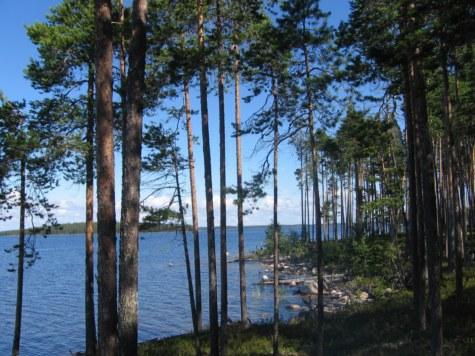 Сегозеро - это сосны, камни и вода до горизонта
