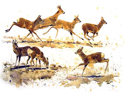 коза в охоте фото