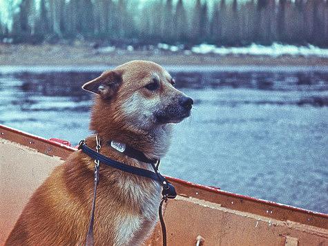Фото: Владимир Сергиевский