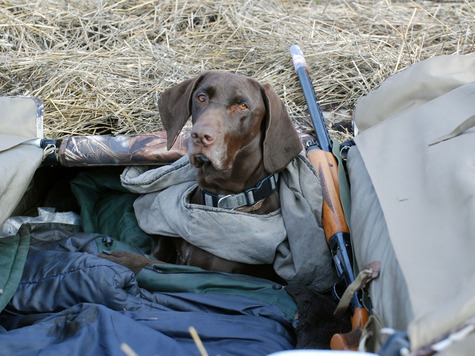 Собака - душа охоты. Фото Сёмина Михаила