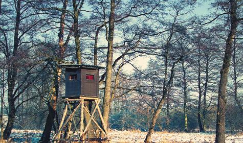 Охота накабанов считается одной из самых опасных, поэтому вхорошо организованных хозяйствах при загонных охотах кабанов стреляют сневысоких платформ.