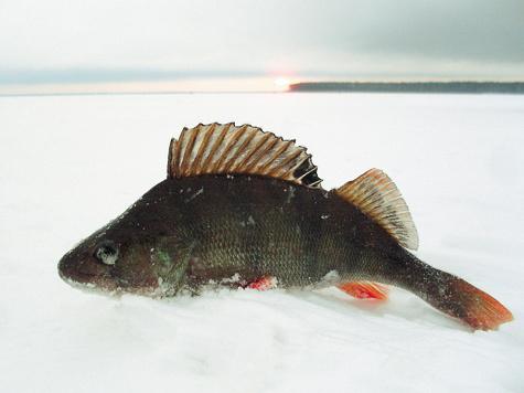 прогноз клева рыбы в бикбулово