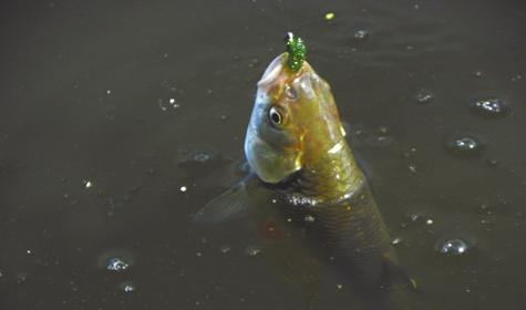рыба клюнула на рыбака