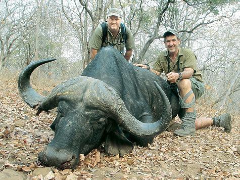Мбого, Черная смерть, Дьявол— как только не называют буйвола за его неукротимый нрав! ФОТО CIFOR/FLICKR.COM (CC BY-NC-ND 2.0)