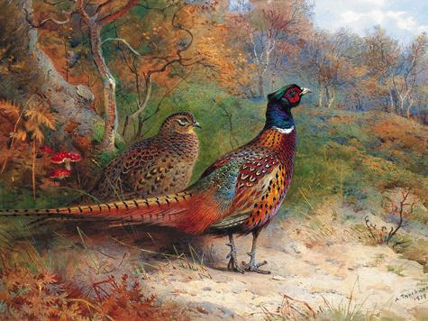 Арчибальд Торнбурн— один из самых талантливых художников-анималистов Великобритании XIX века — многие свои работы посвятил фазанам.