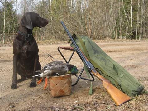 В нынешнее время, курковое ружье - только у ценителей... Фото: Семина Михаила