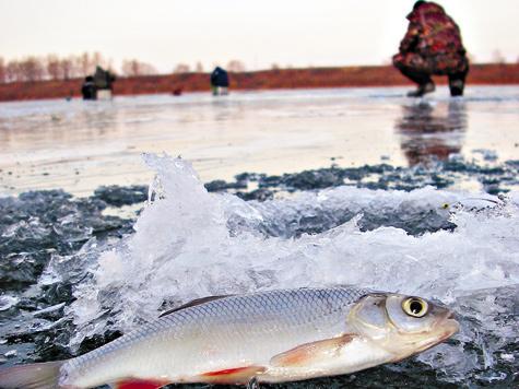 При лучшей приспособляемости речной рыбы в бесклевье ловля нареках приоритетна перед иными водоемами.
