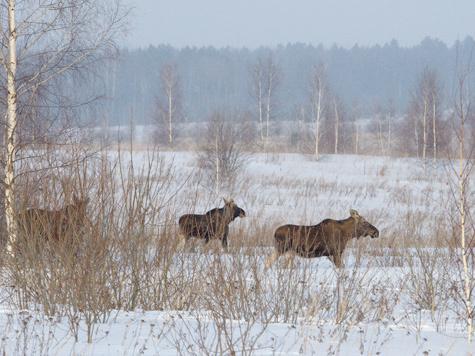 Фото Дмитрия Шаницина