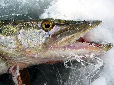 незаконная платная рыбалка на прудах