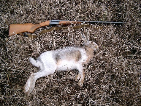 На охоту по чернотропу выходят ближе к обеду, когда заяц успокоился и хорошо залёг - облежался. Фото: Семина Михаила