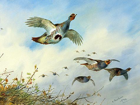 Иллюстрация из архива Петра Зверева